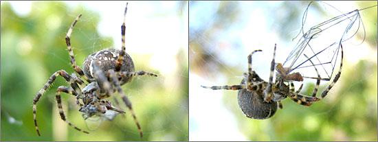 spinnen.jpg